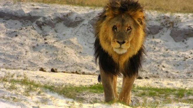 BeCuriousAboutTheWorld - Botswana