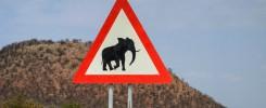 BeCuriousAboutTheWorld - Zwierzęta w Afryce