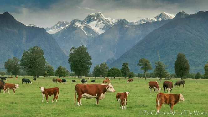 BeCuriousAboutTheWorld - New Zealand