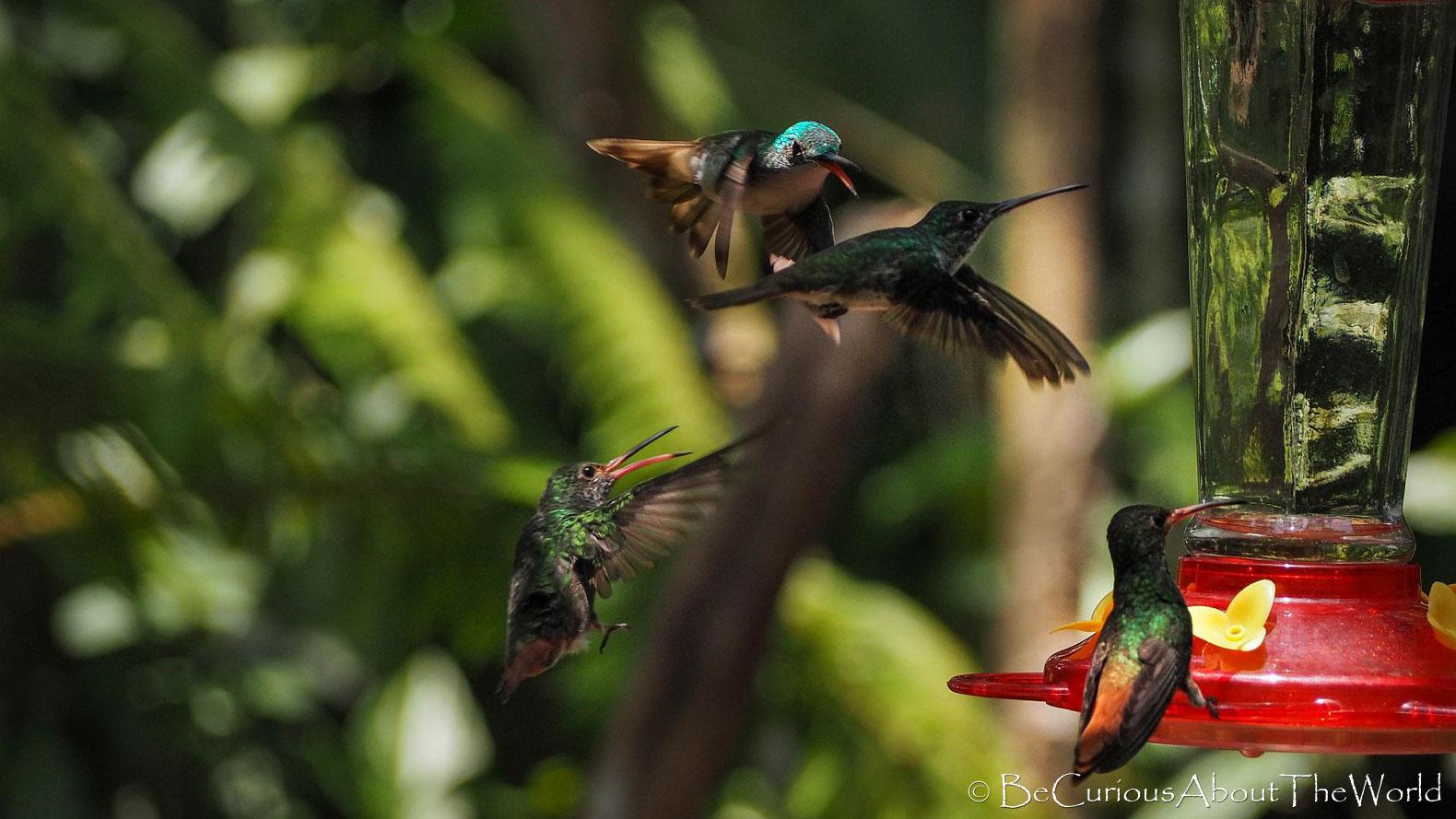 BeCuriousAboutTheWorld - Ekwador