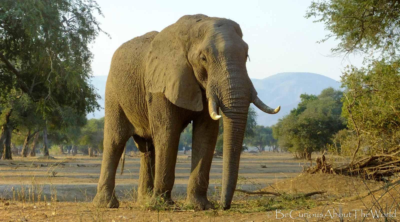 BeCuriousAboutTheWord - Zimbabwe