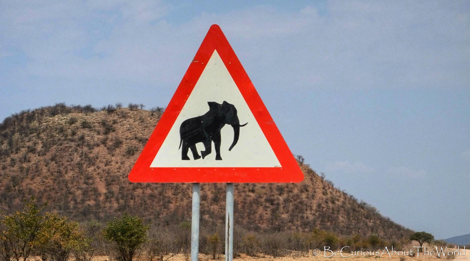 BeCuriousAboutTheWorld - African animals